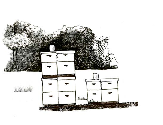 Drawing of an apiary.