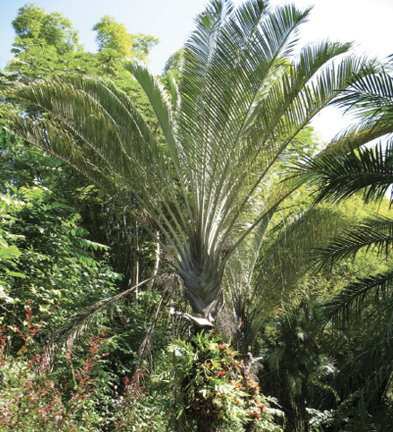 A green, brushy area with a large, fan-shaped palm in the center.