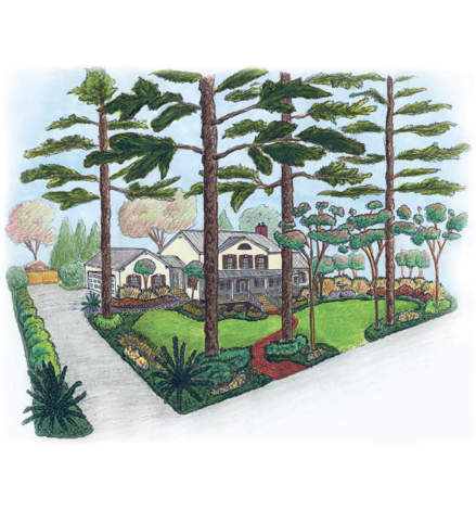 Color drawing of a house, front yard, and driveway with landscaping that demonstrates uses of various plants and trees. Single, shrubby cycads are on either side of the driveway entrance.