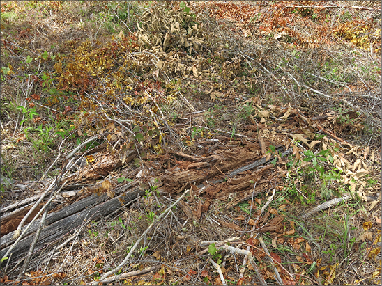 Ground with chopped and dying or dead vegetation and stems. Some green vegetation is visible.