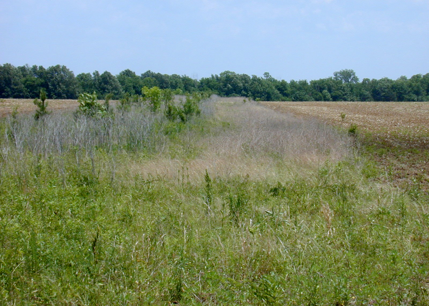 a field buffer in Clay County, Mississippi.