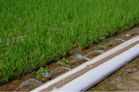 Polypipe irrigation method used in the PHAUCET progrma.