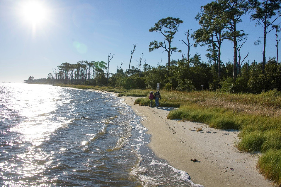 An image of volunteers cleaning the Mississippi Coast. Photo by Kevin Hudson, Agricultural Communications.