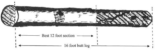 This 16-foot butt-log has a DBH of 12 inches and an SD of 10.6 inches. It has clear sections of food 5 and 3 feet long, so it can only be an F3 grade.