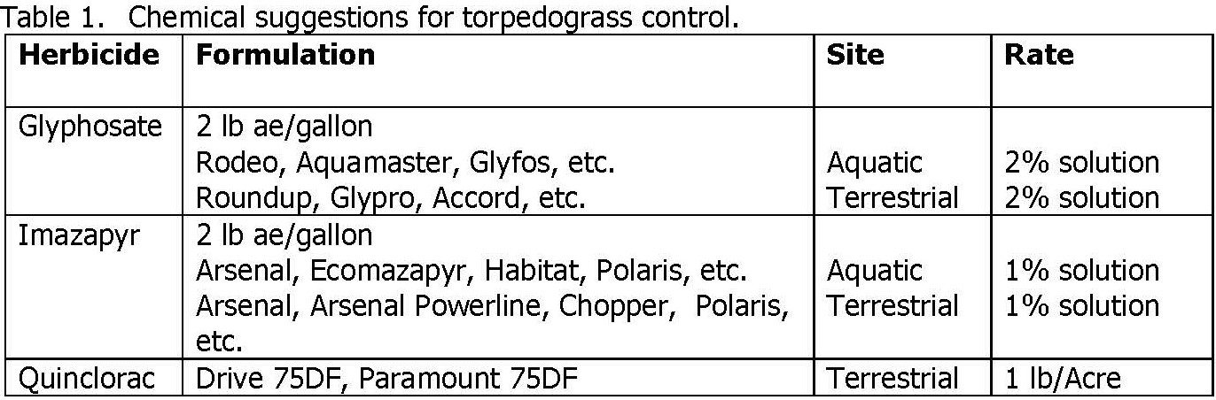 chemical suggestions for torpedograss control.