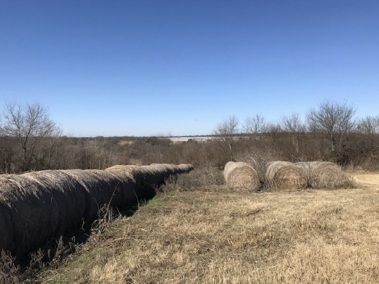 Bales of hay arranged in a line. To the side, there are three more bales of hay. In the background, the trees are brown and do not have leaves.