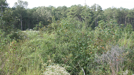 A clearcut with lots of vegetation growing back.