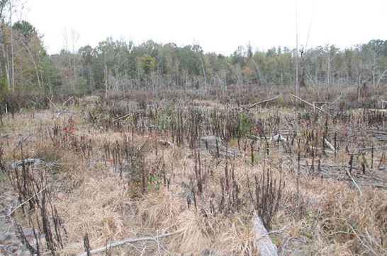 A clearcut that has been sprayed and onsite vegetation has died.