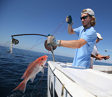 A fisheries scientist uses hook-and-line gear to reel a red snapper onto a research vessel in the Gulf of Mexico.
