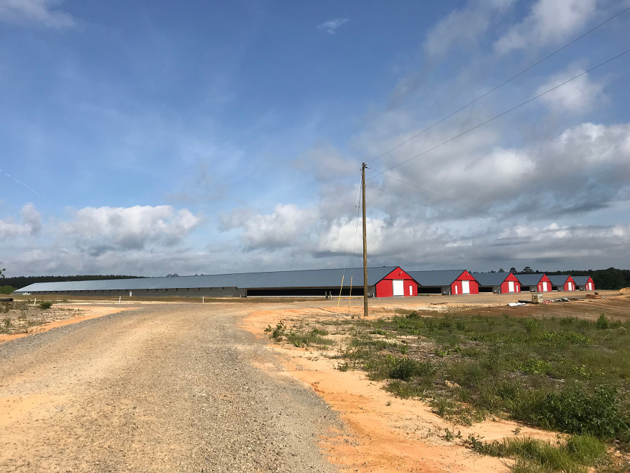A gravel road leading to six poultry houses in the distance.