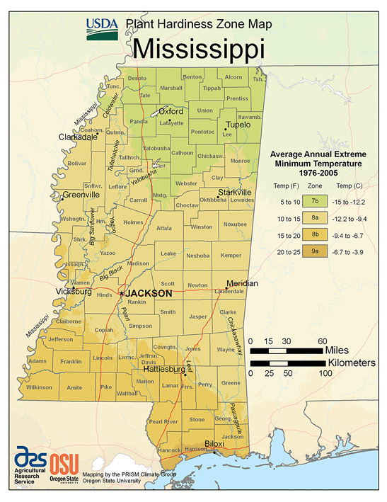 Mississippi cold-hardiness zones range from 7b in north Mississippi to 9a on the coast.