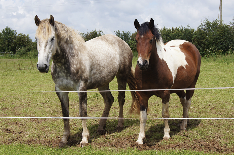 Two horses standing at a pasture fence.
