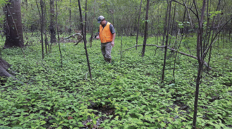 A man stands a forest with thousands of seedlings growing.