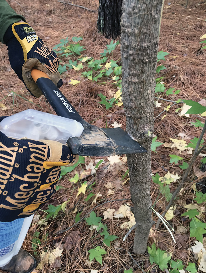 A man wearing gloves cuts into a small tree with a hatchet and squirts heribicide into the cut from a spray bottle.