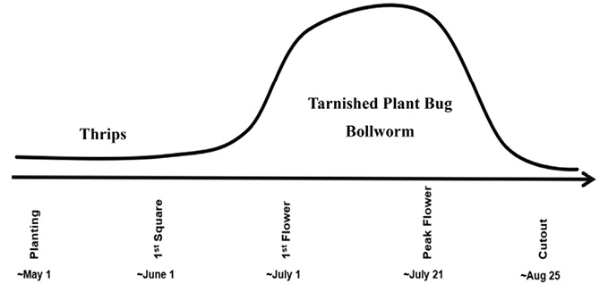 Graphic shows that thrips are the primary concern from planting (about May 1) to first square (around June 1). Tarnished plant bugs and bollworms are a great concern from first flower (around July 1) through peak flower (around July 21), tapering off at cutout (around August 25).