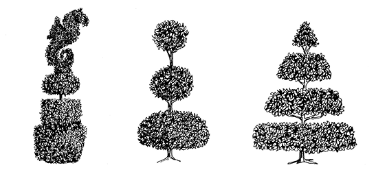 Drawing of three topiaries. One has a squarish base, round center, and a sea lion shape on the top. One has three sections that are round, evenly spaced, and progressively smaller toward the top. One has four sections that are flat and round, evenly spaced, and progressively smaller toward the top, resulting in an overall triangle shape.