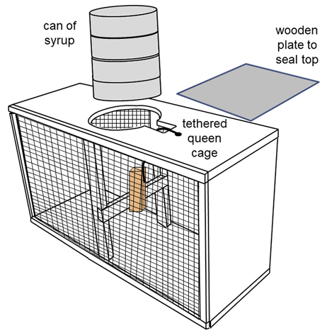 Diagram of a shipping cage used to mail bees. Image description is in caption.