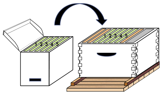 Diagram of a starter unit box with five labeled combs and an arrow showing where those five combs fit into the center of a hive box.