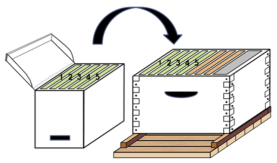 Diagram of a starter unit box with five labeled combs and an arrow showing where those five combs fit in the left side of a hive box.