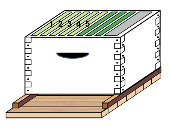 Diagram of a hive box with five light green combs on the left, three dark green combs to the right, and a gray frame representing the division board feeder on the far right.