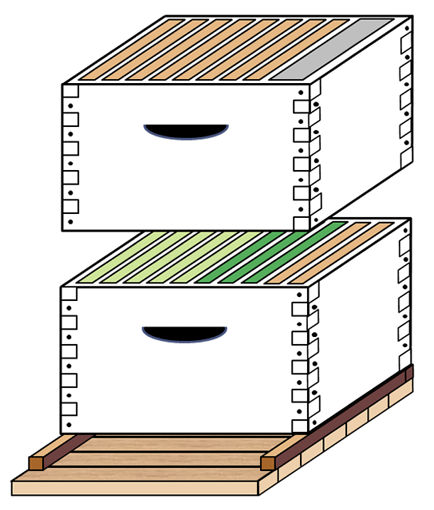 Diagram of two hive boxes. The bottom box has five light green combs, three dark green, and two orange. The top box has eight orange (foundation) frames and a gray frame representing the division board feeder.