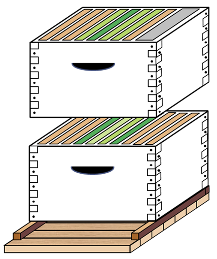 Diagram of two hive boxes. The bottom box has two light green frames in the middle, two dark green frames outside of those, and three orange frames on either side of those. The top box has (from left to right) three orange frames, one light green, one dark green, two light green, one orange, and a gray division board feeder.