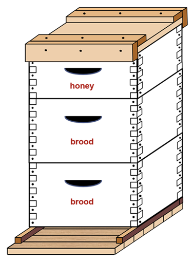 "A hive box with three layers. The two bottom boxes are labeled ""brood,"" and the top is labeled ""honey."""