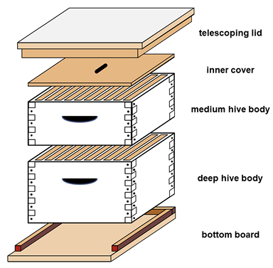 Diagram of a manmade hive with parts identified: telescoping lid, inner cover, medium hive body, deep hive body, and bottom board.