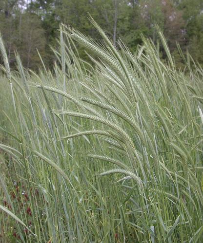 A field of bright green grass.