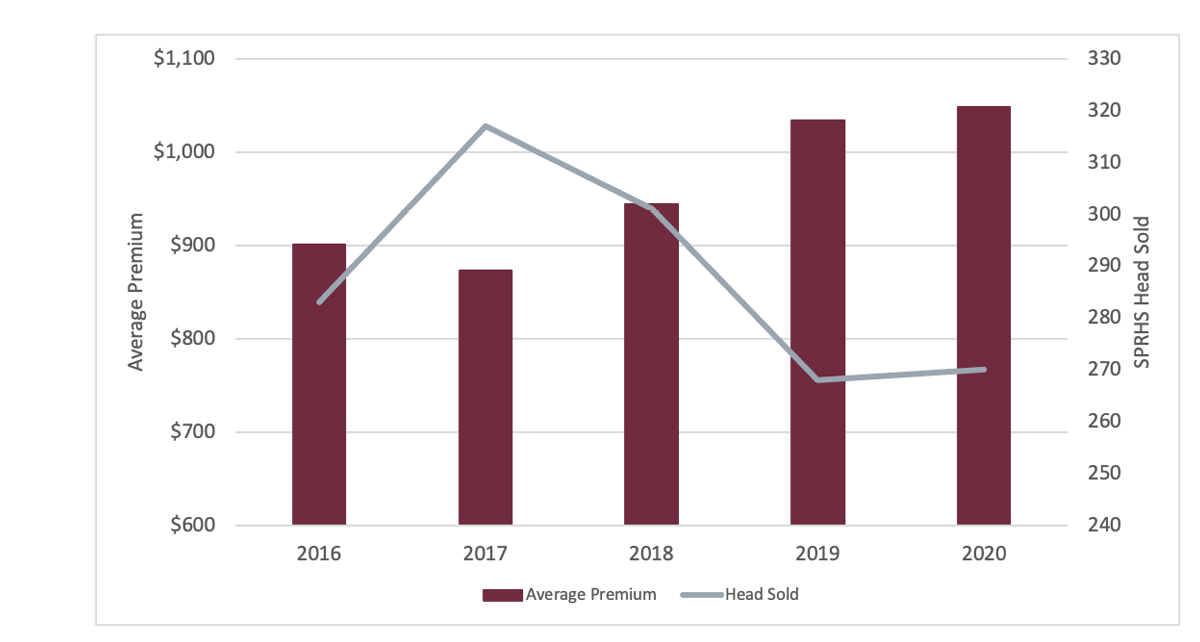 Chart indicates number of heifers sold through the Southern Producers Replacement Heifer Sale program for the years 2016 through 2020. It outlines the average premium earned for each year as well.
