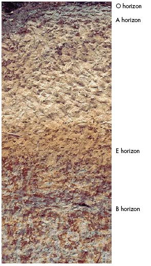 Figure 1. Illustration of soil horizons. Photo by J.D. Kushla.