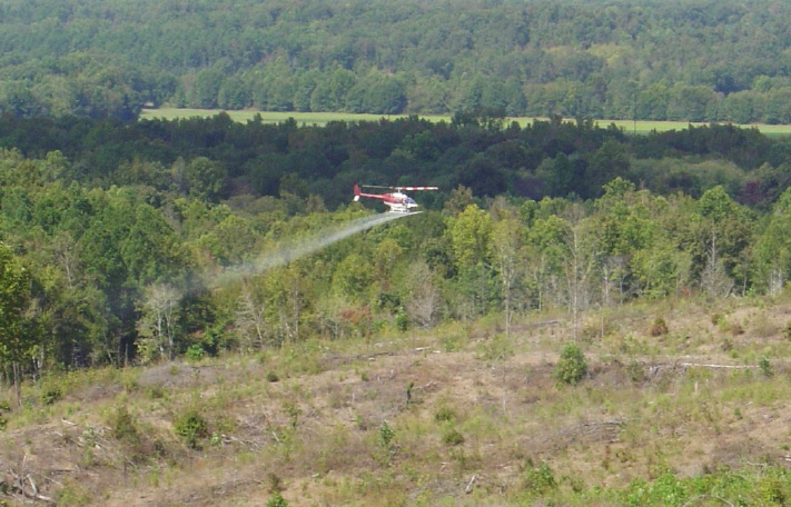 A helicopter applies herbicides on a cut-over during a chemical site preparation for forest regeneration.