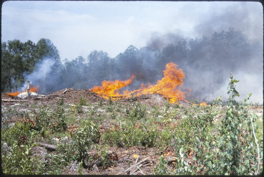 A prescribed fire at a preparation site used to remove residual slash and debris from the seedbed.