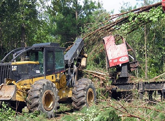 This is an image of a skidder distributing slash from a loading deck into a thinned pine stand.