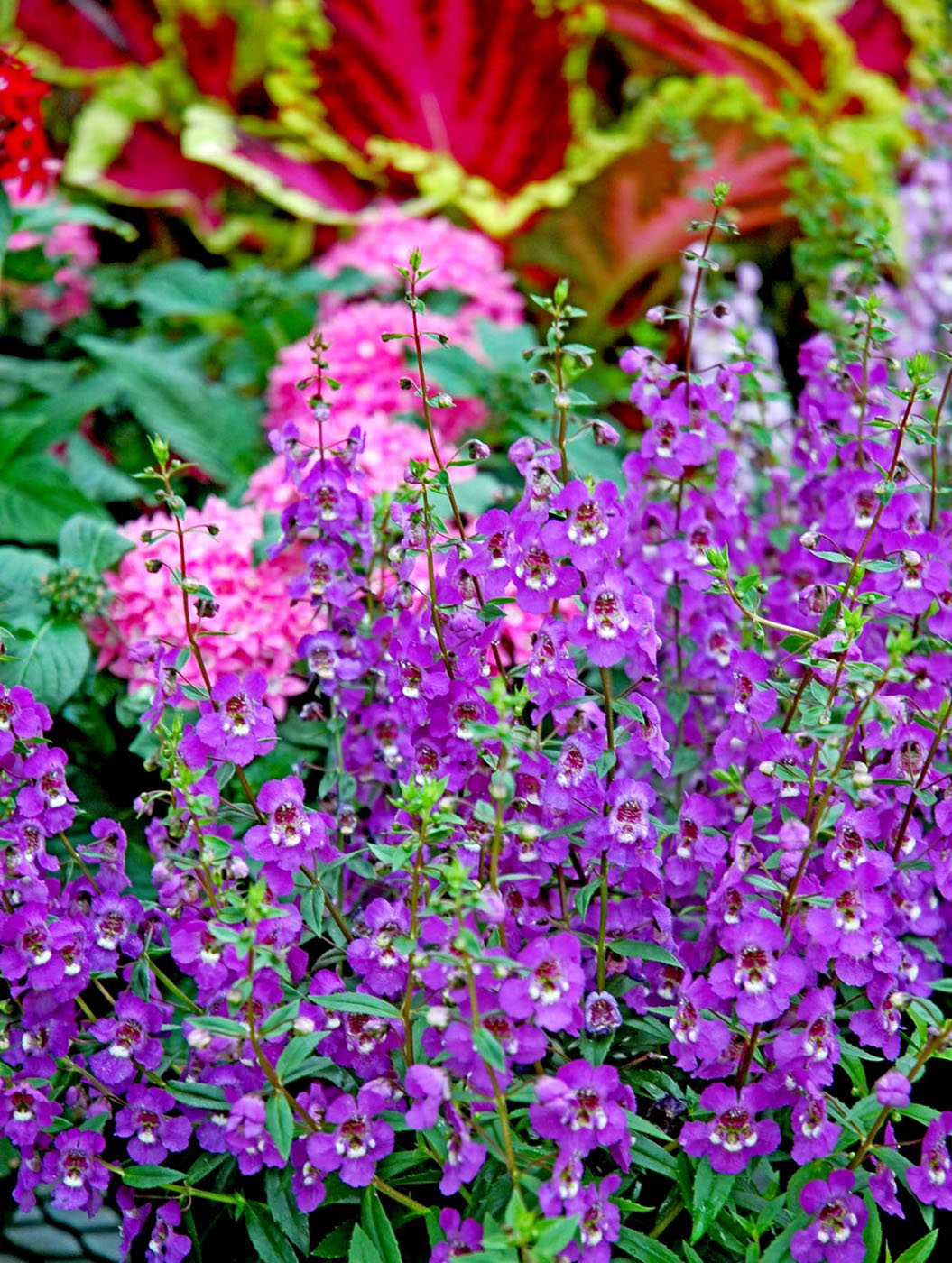 Search For These Top Plants In 39 07 Mississippi State