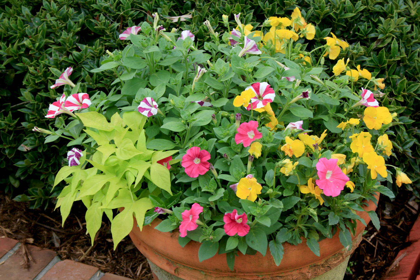 A container pot full of colorful ornamentals.