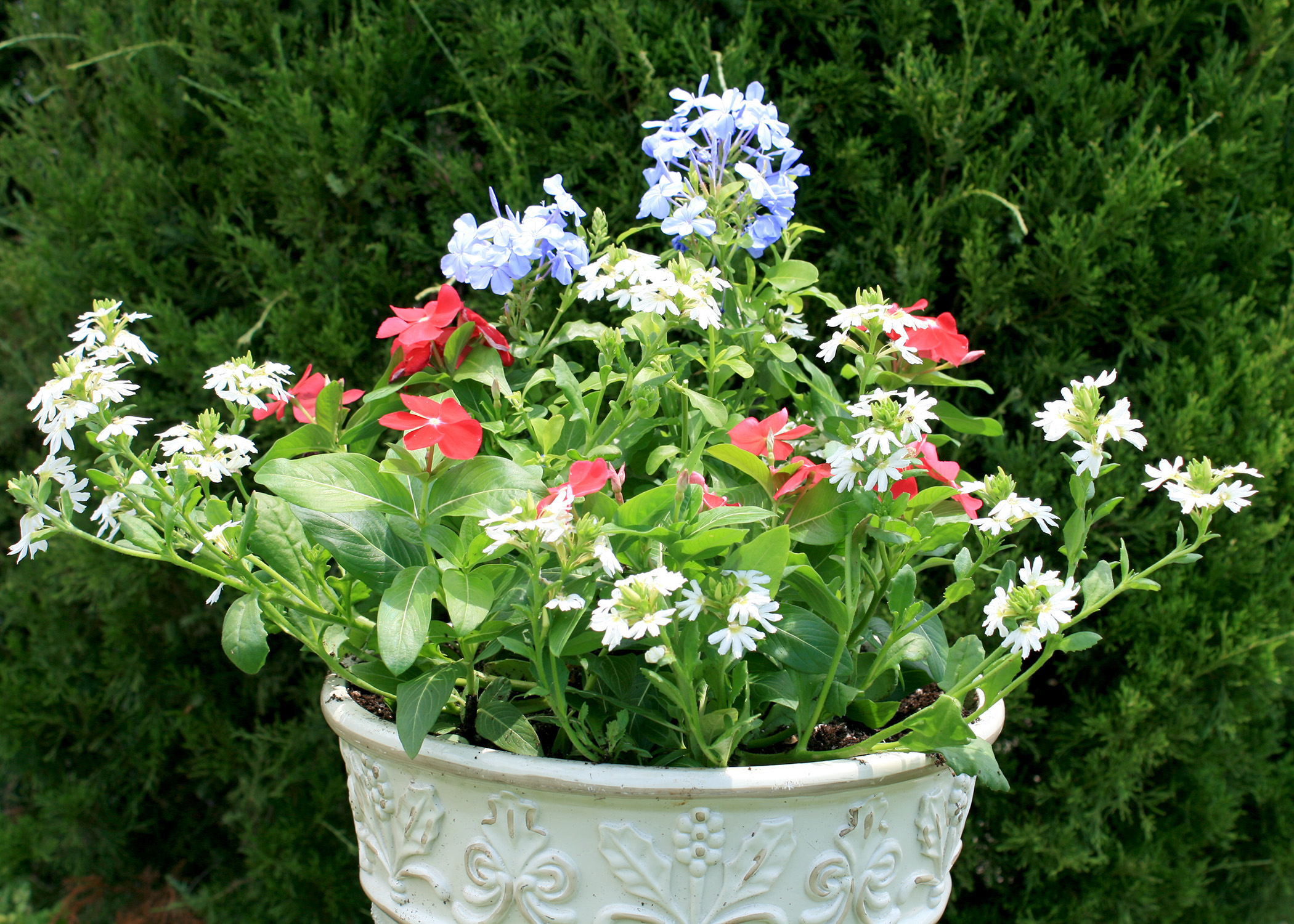 Choose Colorful Options For Summer Containers Mississippi State