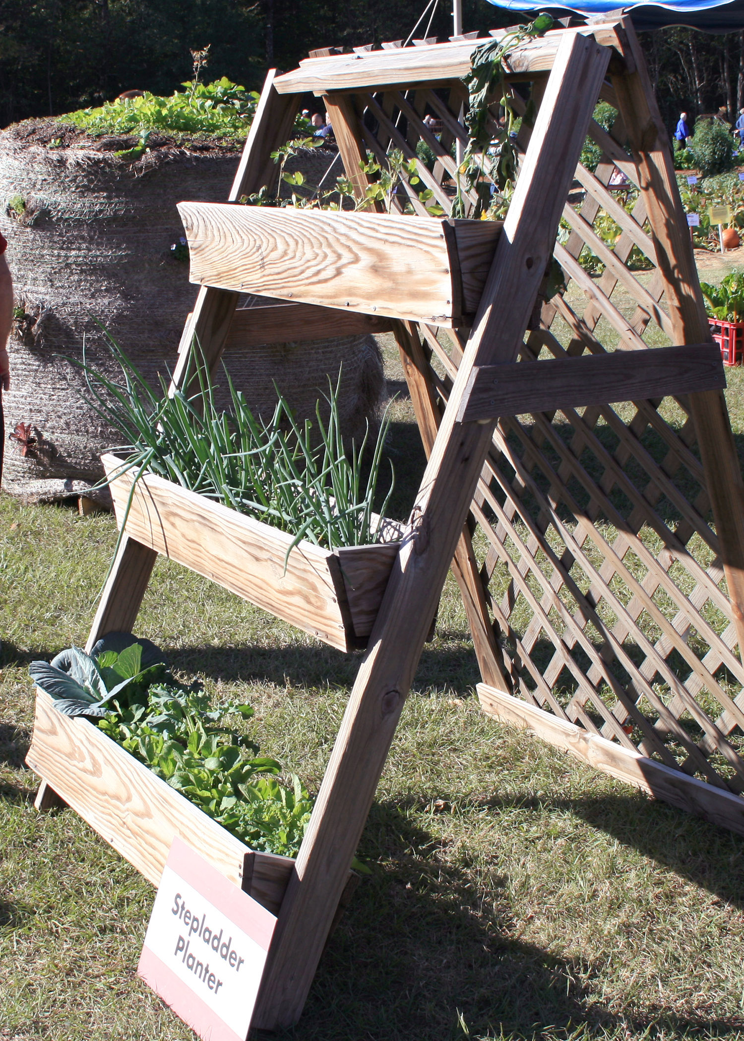 Simple Concepts Make Accessible Gardening