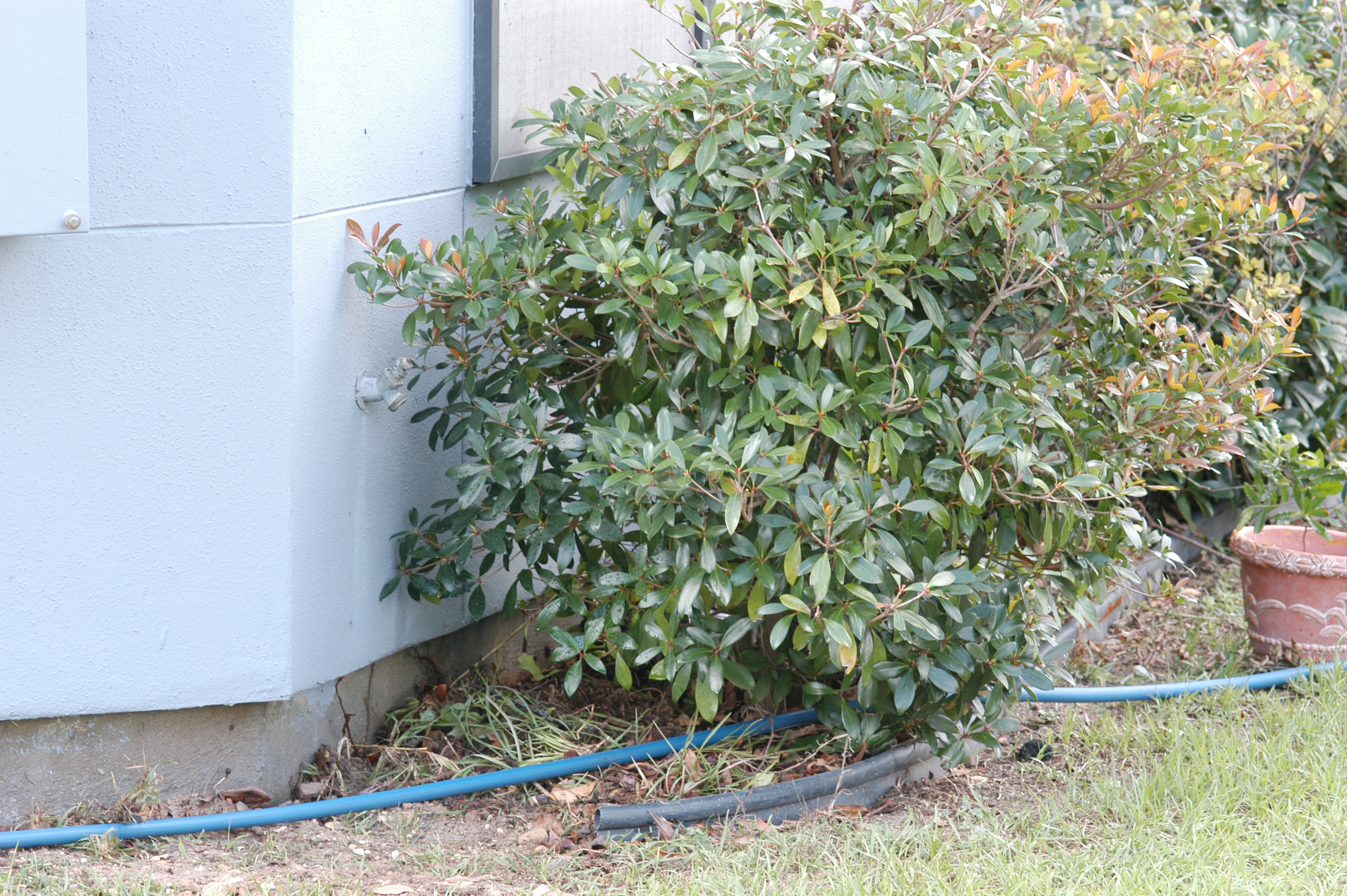 Foundation plantings that are too close to the building increase the potential for termite infestation and make inspection more difficult.  On the positive side, this building has good spacing between the soil surface and the lower edge of siding.