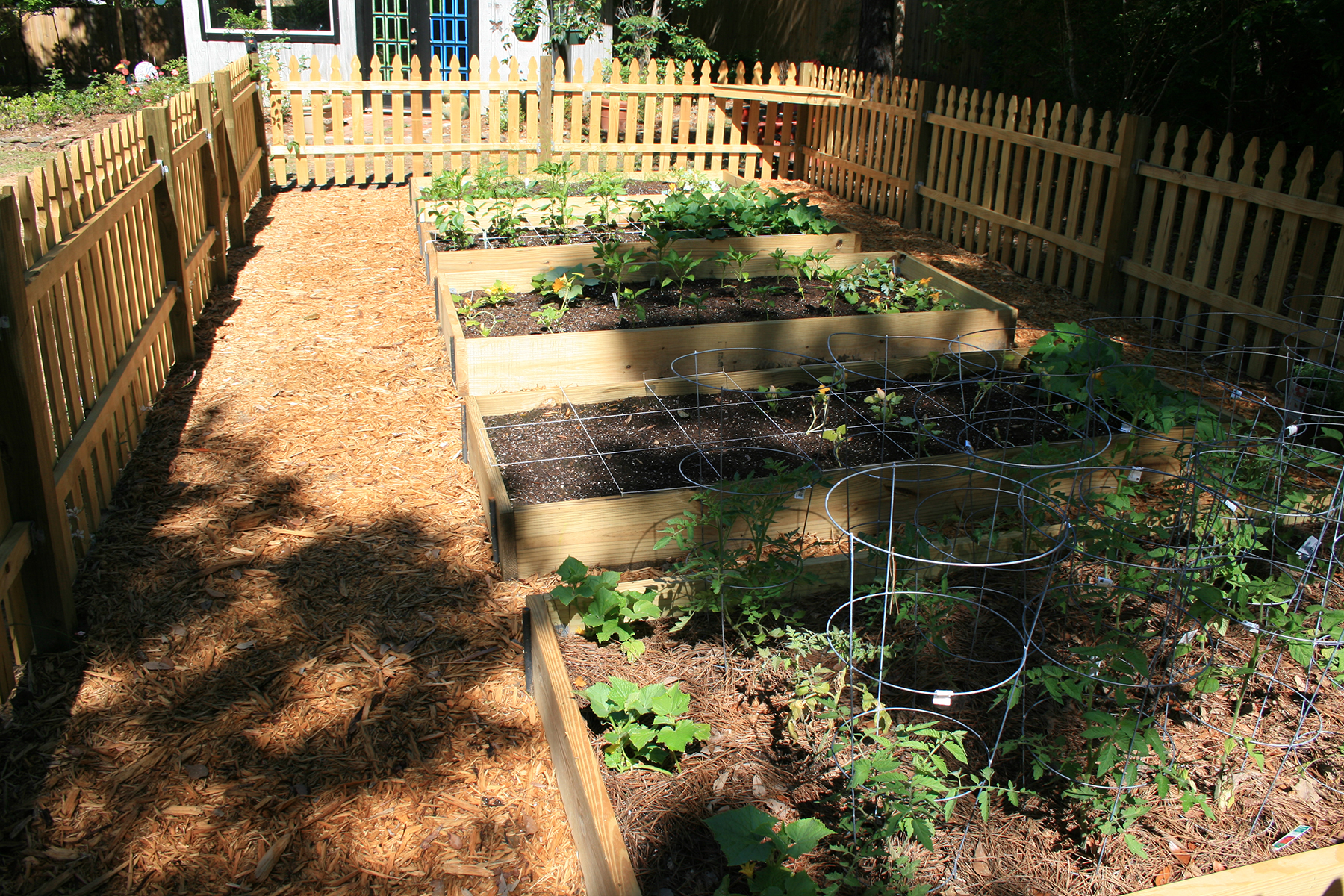 Raised beds constructed using two-by-six boards creates a neat and ordered look to the garden.