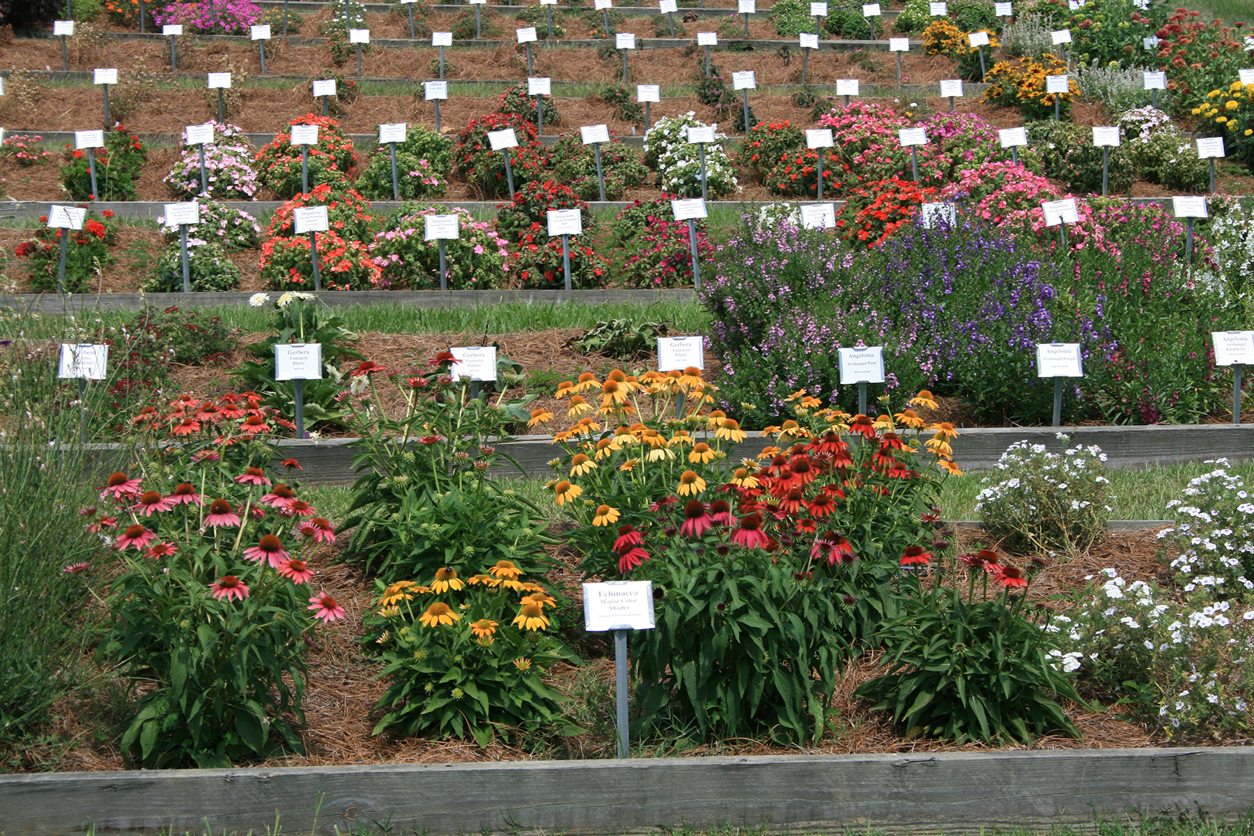 Plant trialing sites use raised beds to provide the best drainage and create a uniform order.