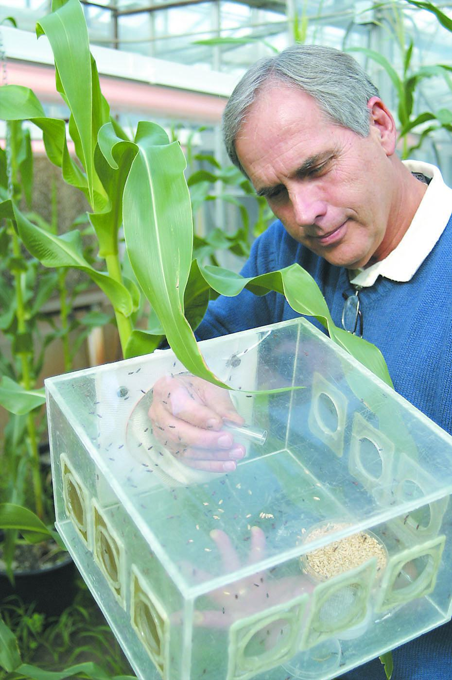 Mississippi State University entomology alumnus Joe Lewis conducted research with parasitic wasps as part of a cooperative United States Department of Agriculture-Agricultural Research Service project to investigate plant response to insect attacks. (Photo courtesy of Tifton Gazette, Georgia/Paula Stuhr)