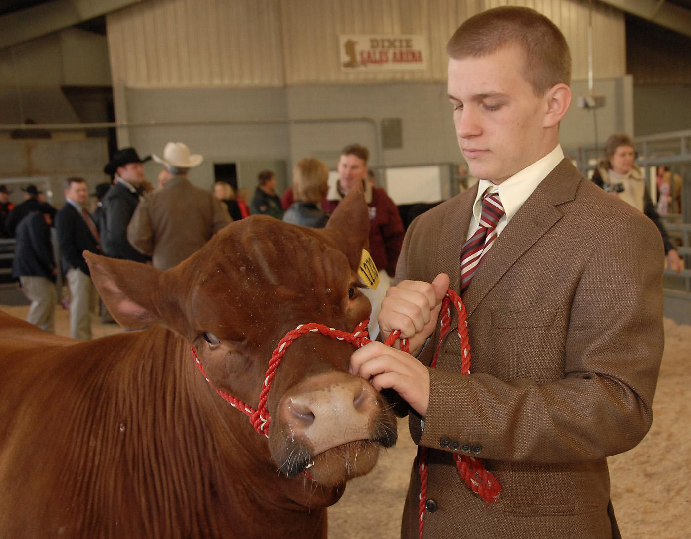 Wes Herrington of Laurel, Miss., 16, prepares to take his steer into the Dixie National Sale of Junior Champions Thursday morning. (Photos by Jim Lytle)