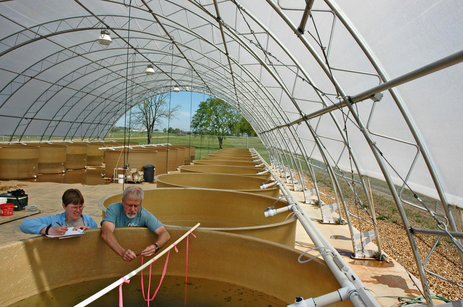 MSU doctoral student Erica Schlickeisen, left, and her major professor, aquatic ecologist Eric Dibble, prepare to sample plants in one of the tanks at the mesocosm on MSU's South Farm. (Photo by MSU Department of Wildlife and Fisheries/Sandor Dibble)
