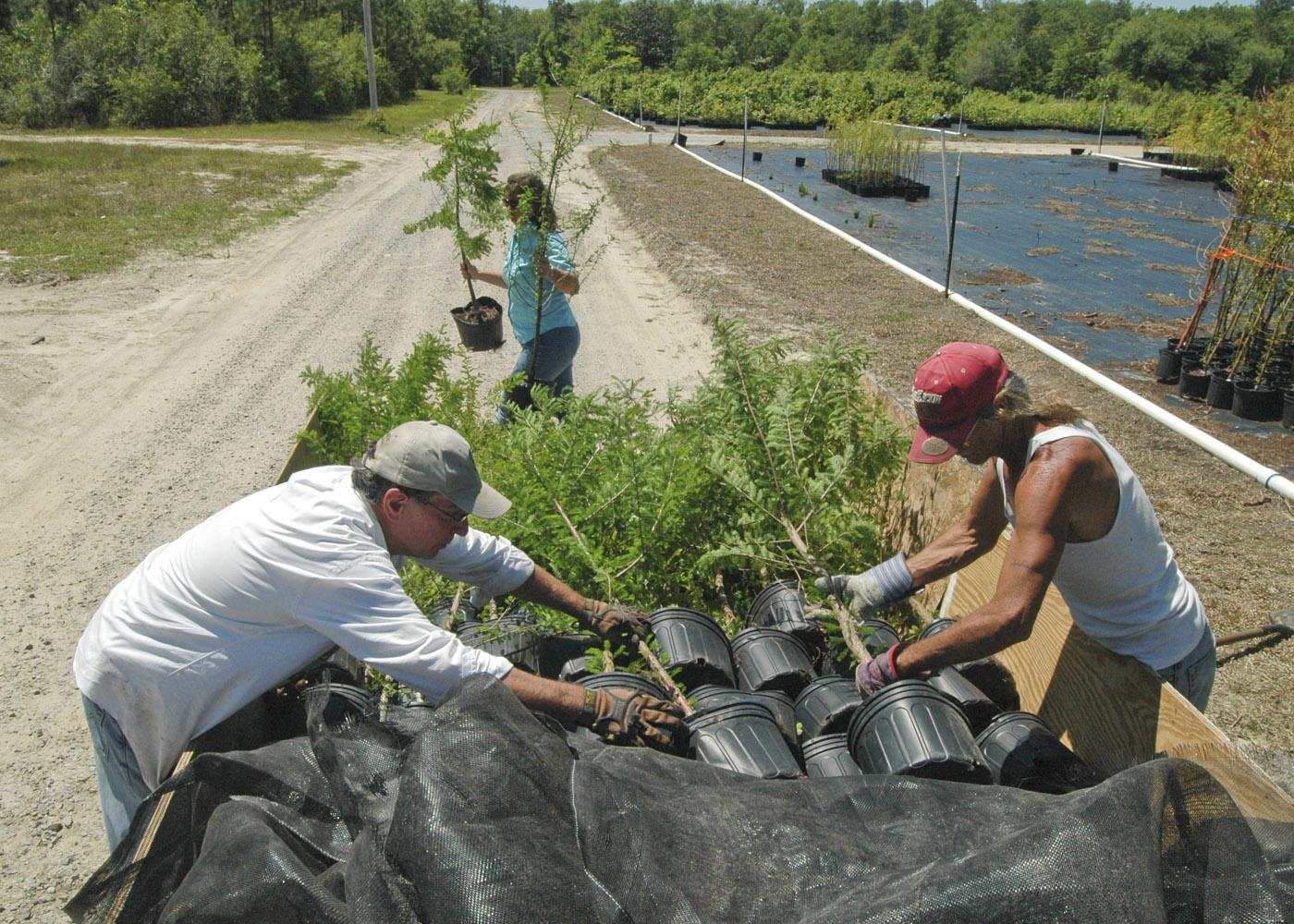 From left, Jim Kelly, restoration expert for the Land Trust for the Mississippi Coastal Plain, and Lavell Mitchell, nurseryman, load RPM trees grown at Young's Nursery in Vancleave while Laura Bowie, Land Trust watershed outreach coordinator, carries more over in this April 23 photo. (Photo by Bonnie Coblentz)