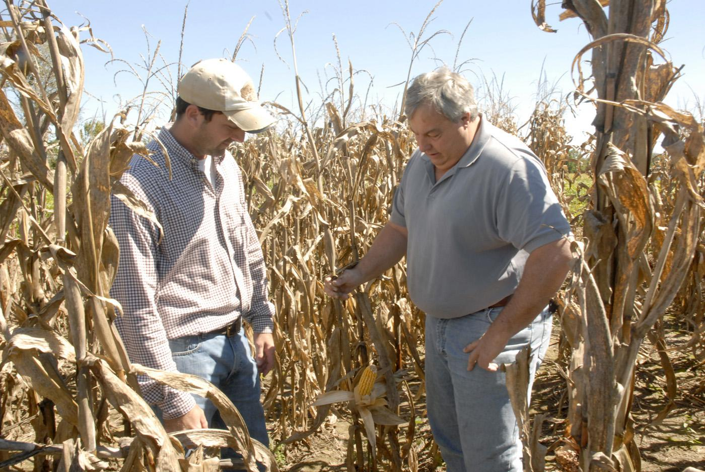 MAFES variety testing operations manager Brad Burgess, left, and Jimmy Sneed, a grower from Senatobia, visit a corn plot on Sneed's farm near Hernando shortly before the 2009 harvest. (Photo by Linda Breazeale)