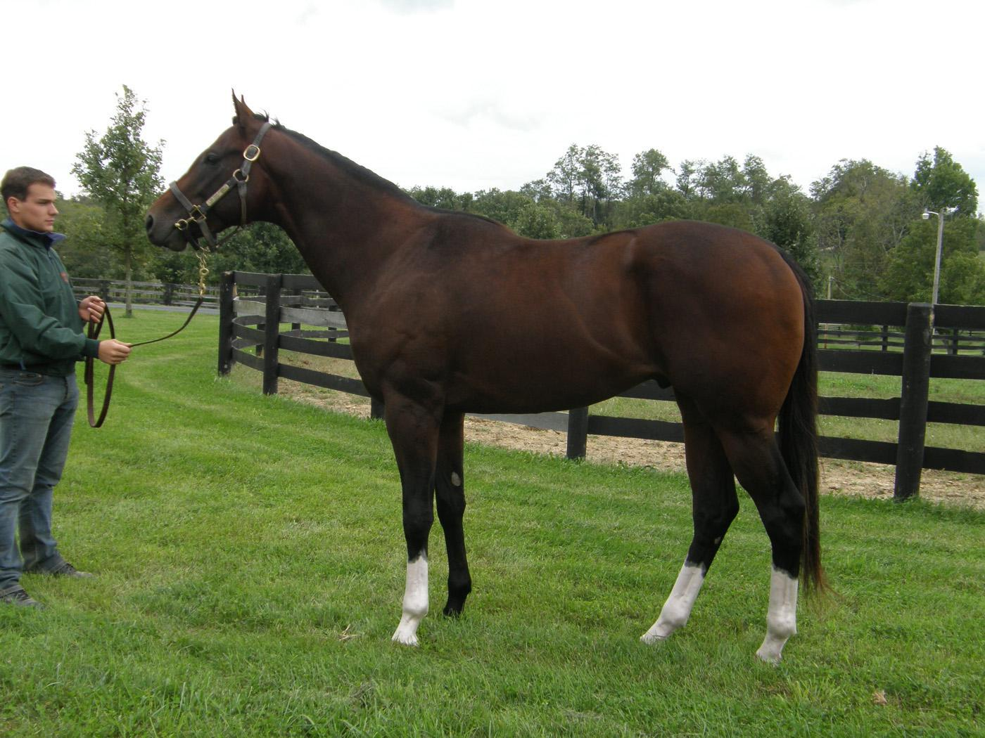 Big Train A' Comin, a 3-year-old bay thoroughbred, is available to horse owners wanting to breed their mares to Mississippi State University's new, top-pedigree stallion. (Photo compliments of MSU Ag Communications)