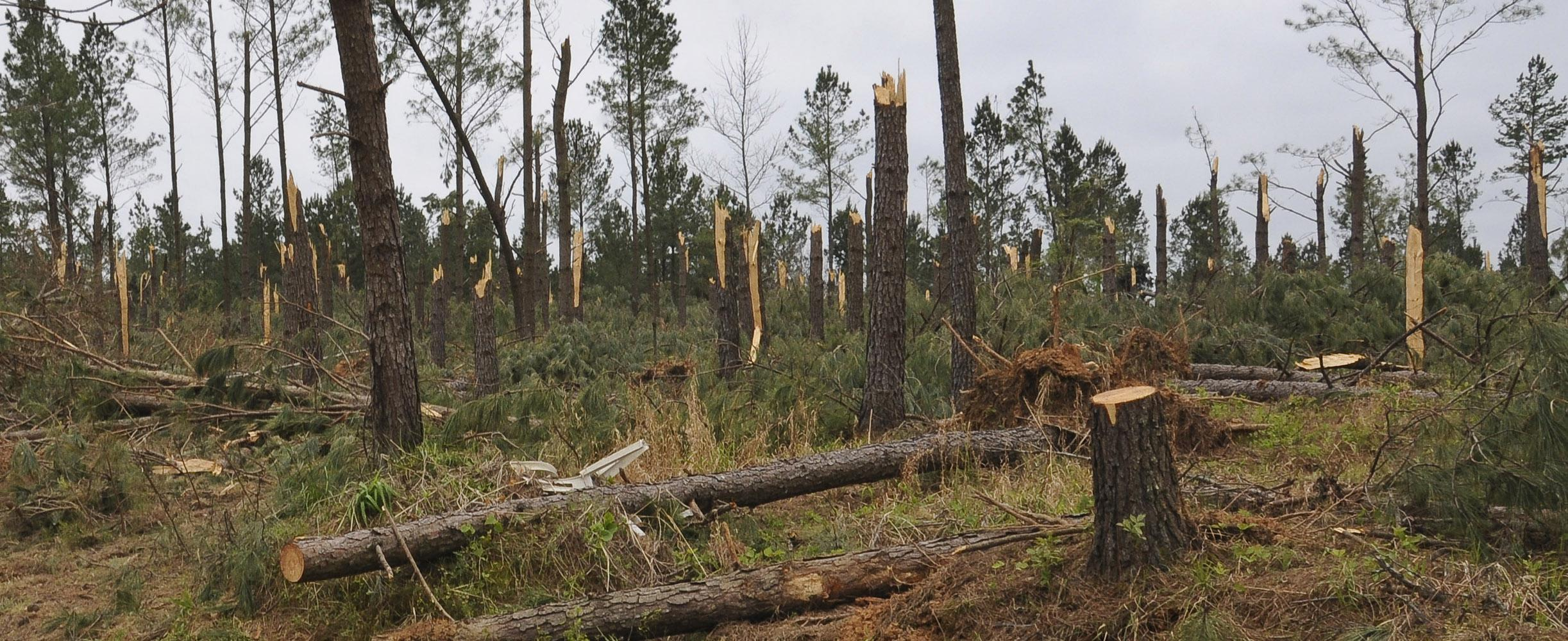 Timber was heavily damaged in Choctaw County. This photograph was taken near the Weir community on April 30. Photo by Scott Corey.
