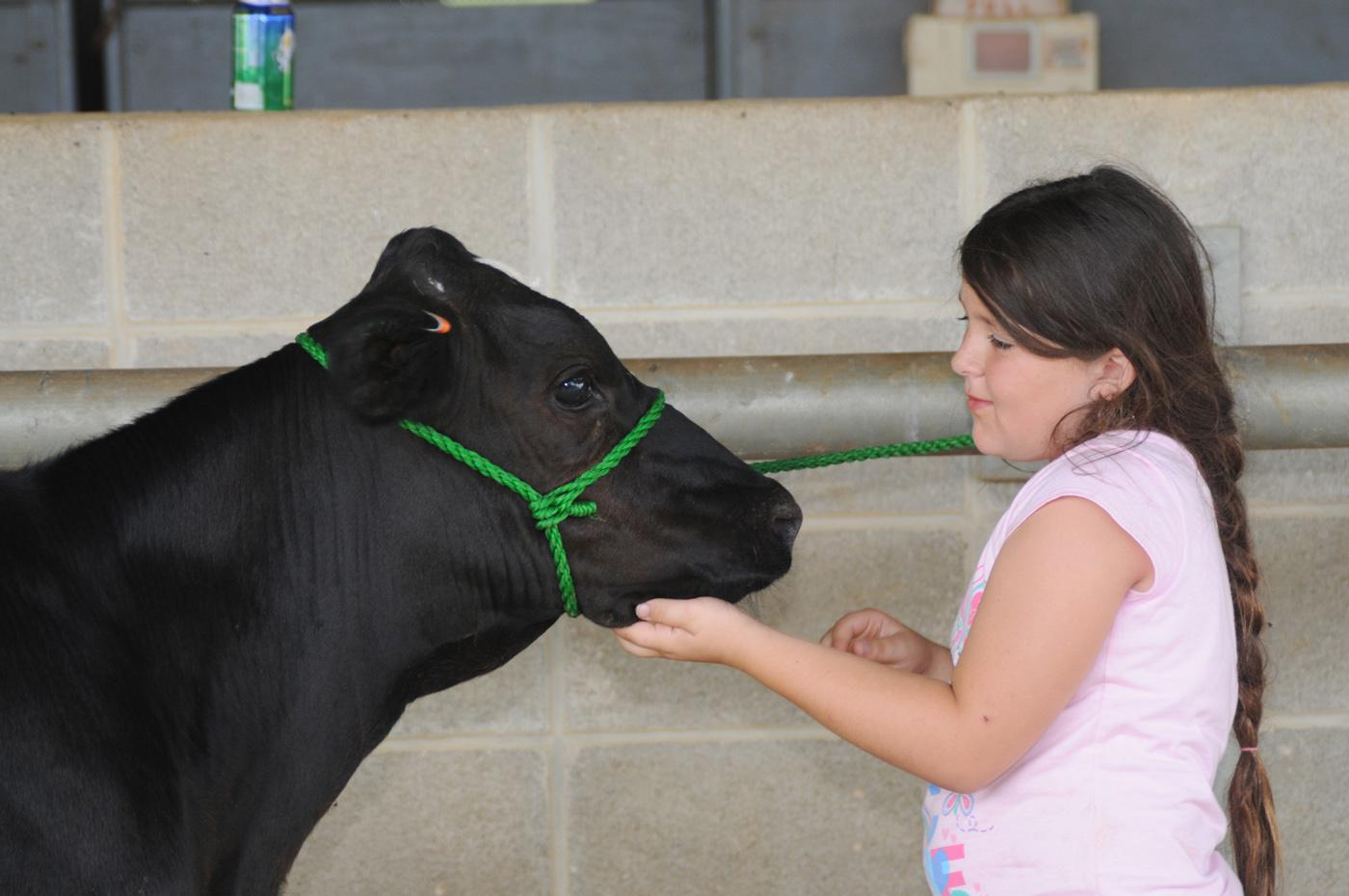 Emmie Rowlen, 8, of Webster County, affectionately pats her dairy calf during a break at Mississippi State University's 4-H dairy cow camp. (Photo by MSU Ag Communications/Kat Lawrence)