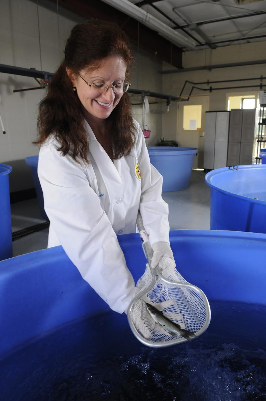 Dr. Lora Petrie-Hanson, an associate professor of immunology in MSU's College of Veterinary Medicine, examines a channel catfish raised for aquaculture disease research in the university's fish hatchery. (Photo by Tom Thompson)
